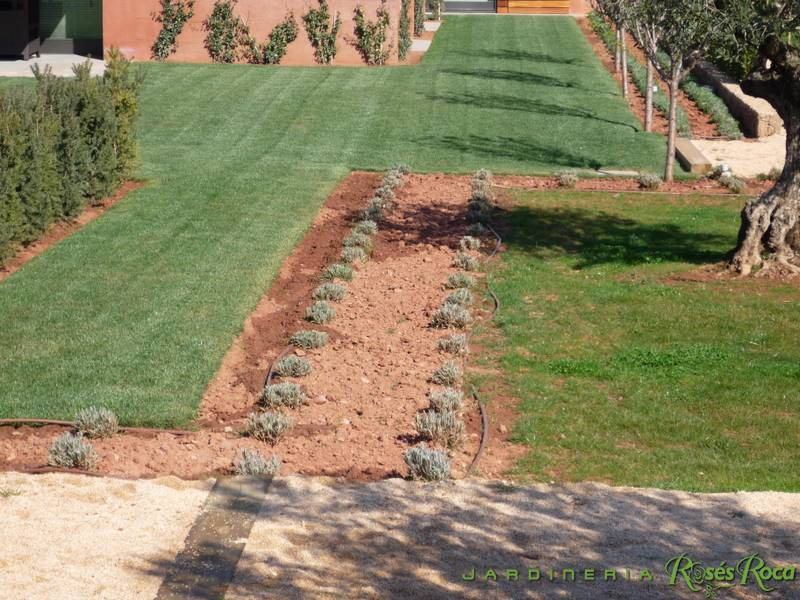 JardineriaRosesRoca11