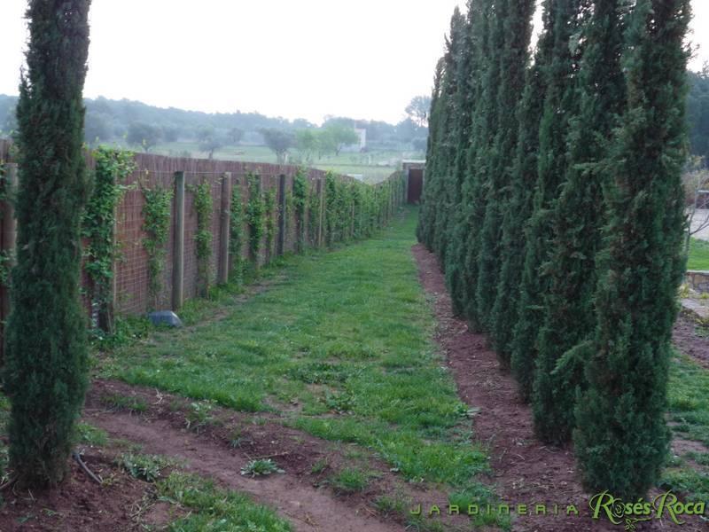 JardineriaRosesRoca15