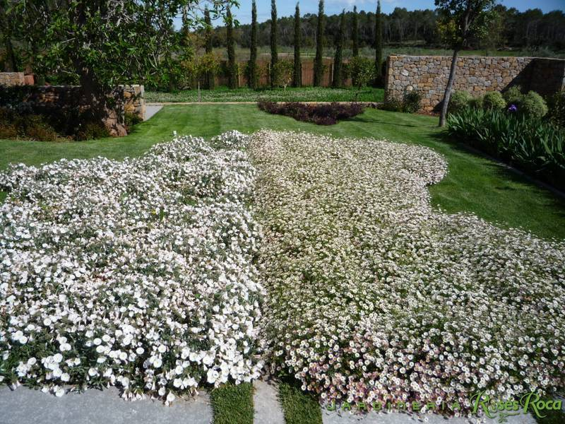 JardineriaRosesRoca26