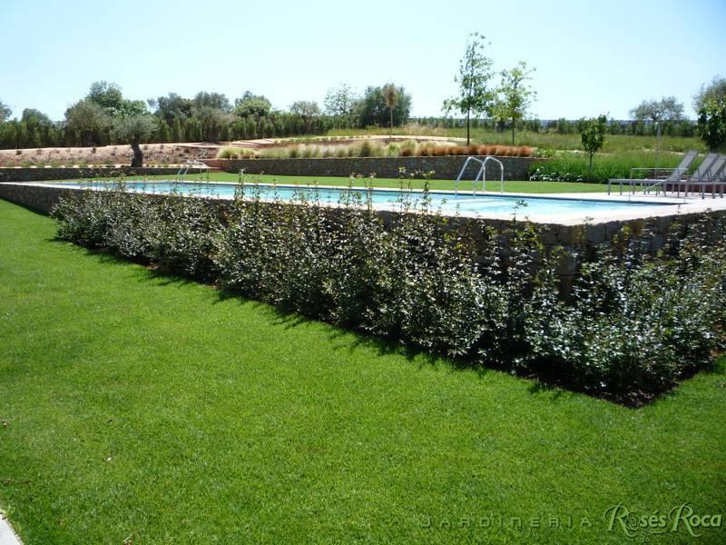 JardineriaRosesRoca39