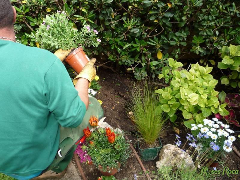 JardineriaRosesRoca33