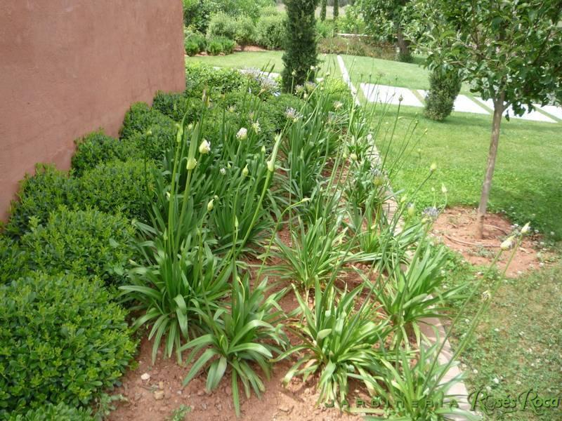 JardineriaRosesRoca49