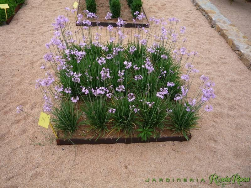 JardineriaRosesRoca5