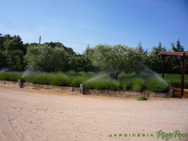 JardineriaRosesRoca59